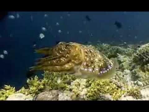 Cephalopod Fight Song - Karaoke Video