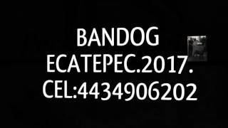 Cachorros Bandog ecatepec 2017.