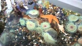 Reef-a-palooza 2011 - Fishchannel.com