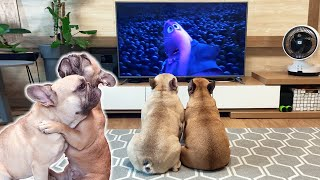 French Bulldog's Adorable Reaction To Saddest Scene Inside Out Movie