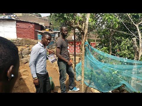 John King...A Young Agriculturist in Freetown : kaikai news