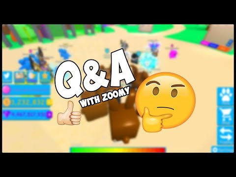 Q & A With Zoomy !