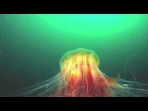 Interesting Jellyfish Facts