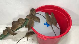 Top 10 Mouse/ Rat Trap | Best Idea Mouse Trap Water 🐭 #03