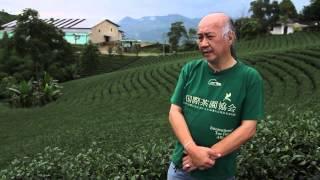 Harendong Tea Farm Banten Indonesia