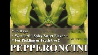 PEPPERONCINI STAVROS ~ Greek heirloom Pepper seeds, Seeds by  www.MySeeds.Co