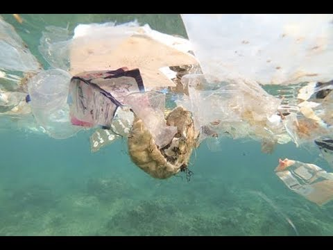 Environmental group calls to reduce production of single use plastic