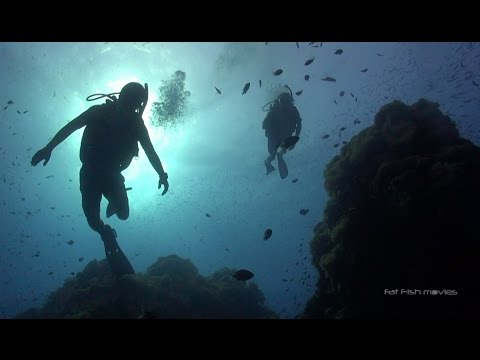 Scuba Diving in Koh Tao - August 2015 highlights