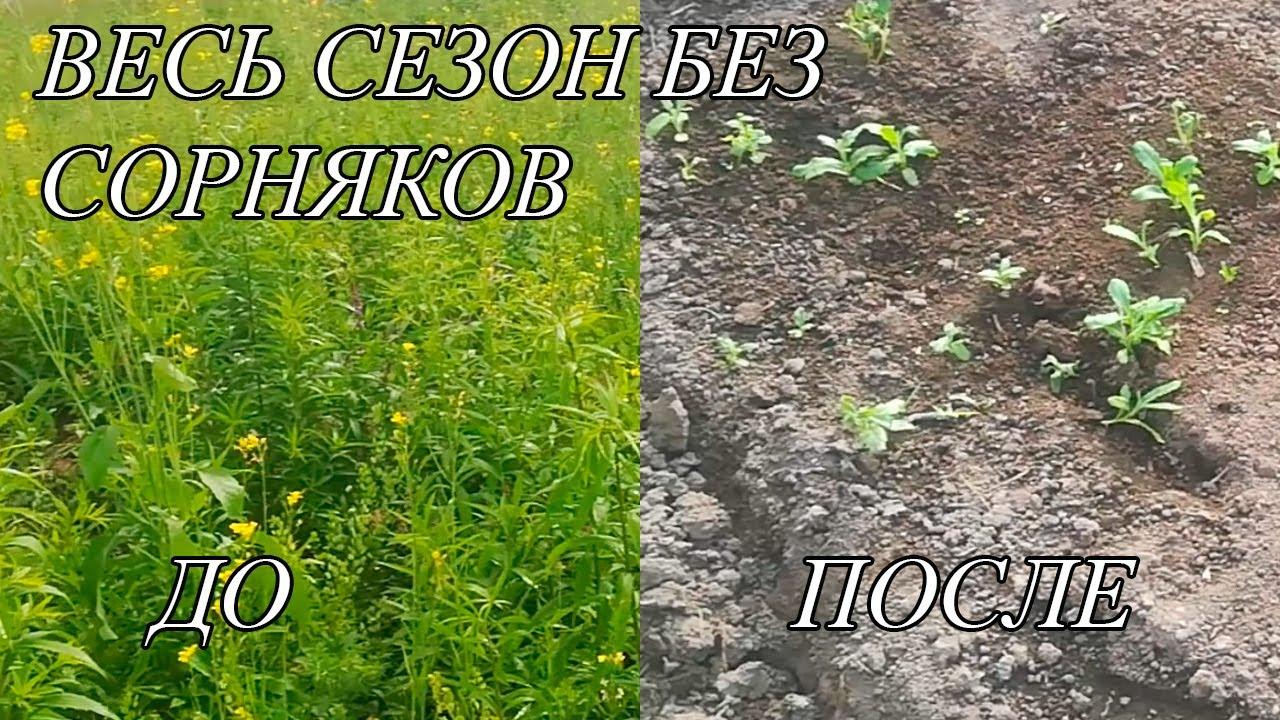 Как легко избавиться от сорняков на огороде: Простой способ