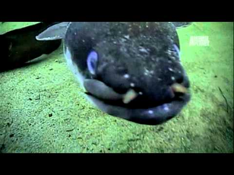 River Monsters: Flesh Ripping Eels - YouTube