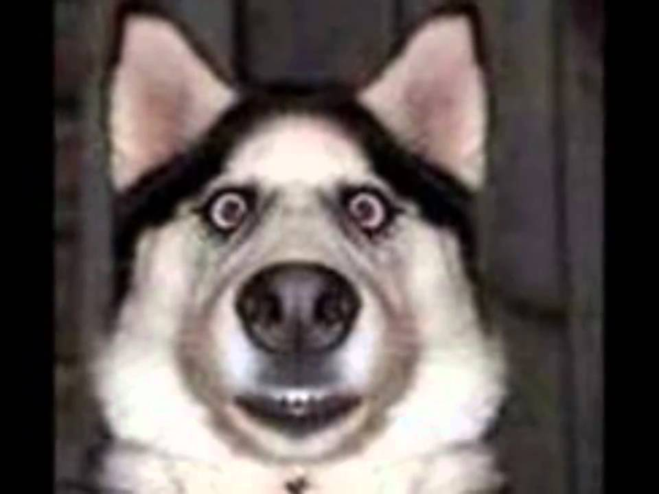 Who Let The Dogs Out Funny Dog Pics Youtube