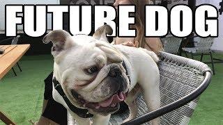 СОБАКА БУДУЩЕГО | УМНЫЙ ПЁС | FUTURE DOG | СОБАКА ОТ ПЕРВОГО ЛИЦА