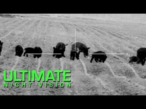 Thermal Hog Hunting with Lunkers TV