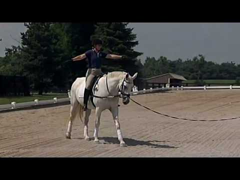 Phrase... super, Lunging the adult rider book