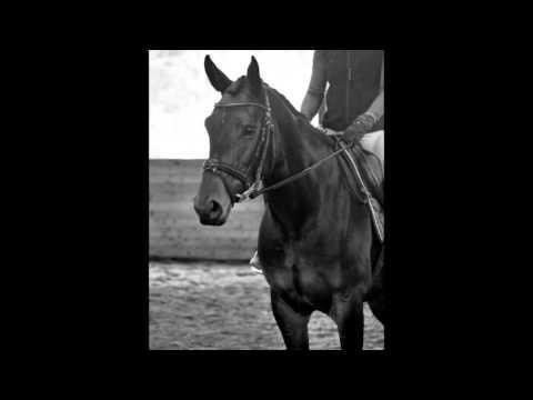Lucera Sale Video