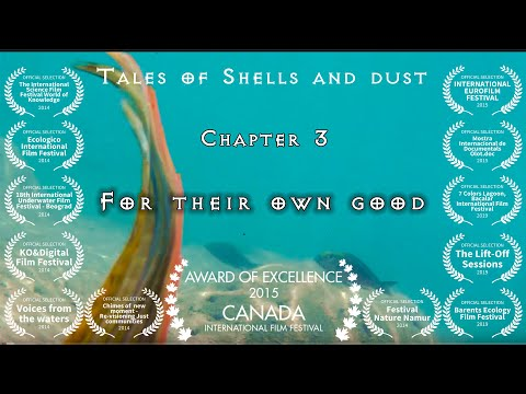 Tales of Shells and Dust - Chapter 3 of 7 - For their own good