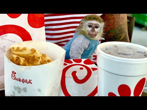 Romeo - My obsession with baby monkey Curtis continues.....