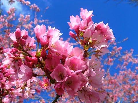 Весенние цветы. Нежность весенних цветов
