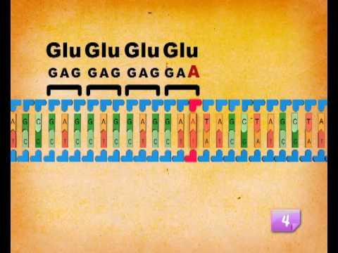 Le mutazioni geniche Step by Step