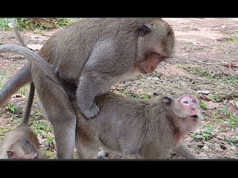 Why female monkey cry Oh Wow? SP pity him mum cry Oh Good, What big monkey doing? She cries Oh Good