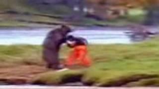 mira cmo pelea el oso mirah jojo
