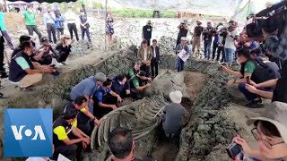 5,000-Year-Old Whale Unearthed in Thailand