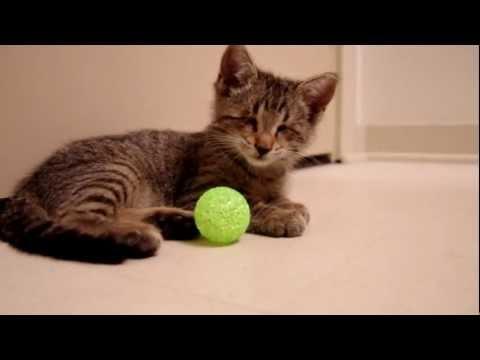 חתול עיוור מקבל צעצועים פעם ראשונה