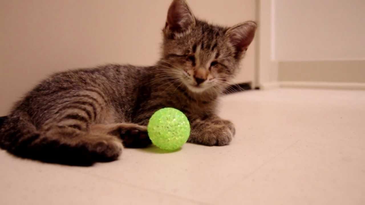 Un gattino cieco riceve il suo primo giocattolo. Ha una reazione senza pari.