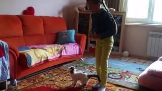 даром котенка циркача +79000019017