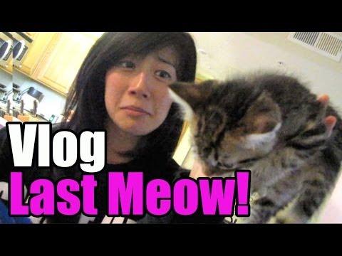 The Last Meow! Vlog | Manic Mondays