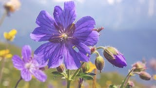 Relaxing instrumental music, Nature sounds