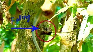 Breaking Heart!, Millinon Sad, New Born Baby Falling Down From Tree, Dead, Have No Idea for This