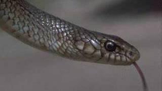 yılanın peygamber efendimize olan aski (s.a.v) FERHAT AYDIN