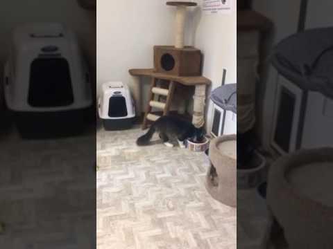 Siskiyou Humane Society Animal Shelter
