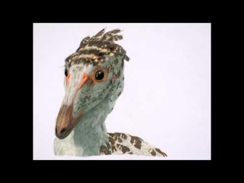 Dino Byte 001 - Troodon