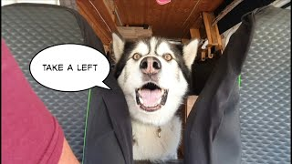 Dog directs owner to its favourite place, This is Hilarious!