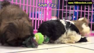 Shih Tzu, Puppies, For, Sale, In, Columbia, South Carolina, Sc, Newberry, Forest Acres, Oak Grove, P