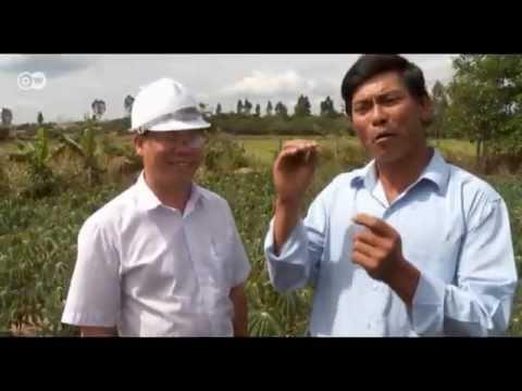 Vietnam: Wärme und Strom aus Maniok   Global 3000