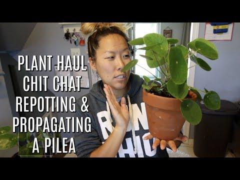 HOUSE PLANT HAUL & REPOTTING MY PILEA | ITSJUSTKELLI