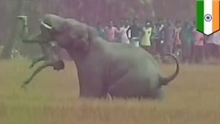 印ベンガル州の村で、今年2016年3月20日、象が村人たちを襲い、5人が死...