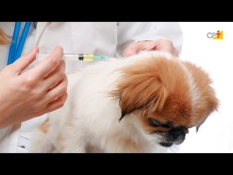 Clique e veja o vídeo Situação de Emergência - Curso a Distância Primeiros Socorros em Cães e Gatos
