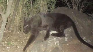 5 Supposedly Extinct Animals Caught on Camera