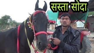Marwadi mare sell in rajasthan  मारवाड़ी घोड़ी काली भंवर   