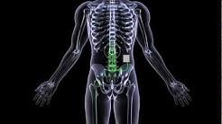 hqdefault - Back Pain Clinic Dallas