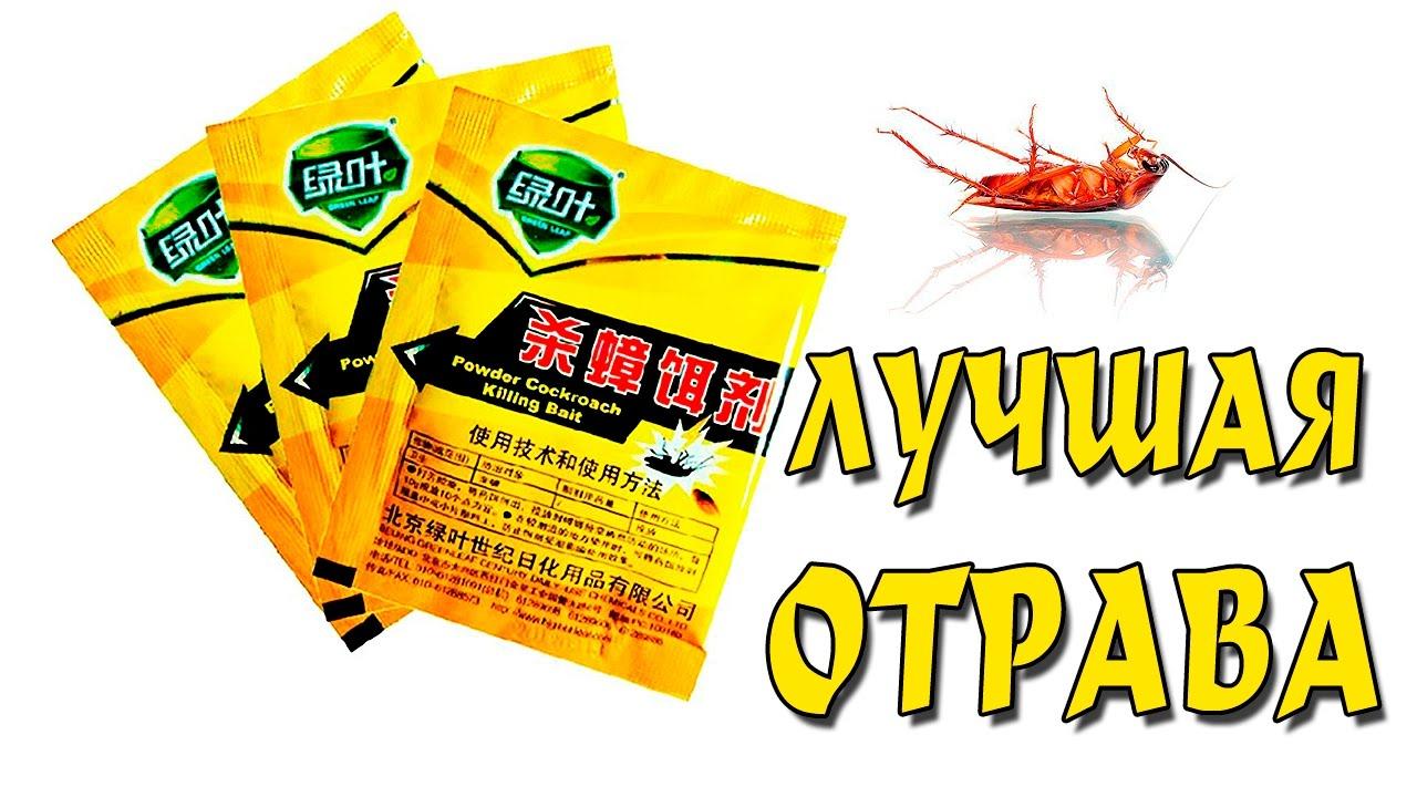 Ловушка на тараканов (первый улов) - YouTube