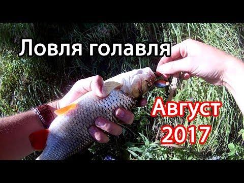все о рыбалке в августе и в сентябре