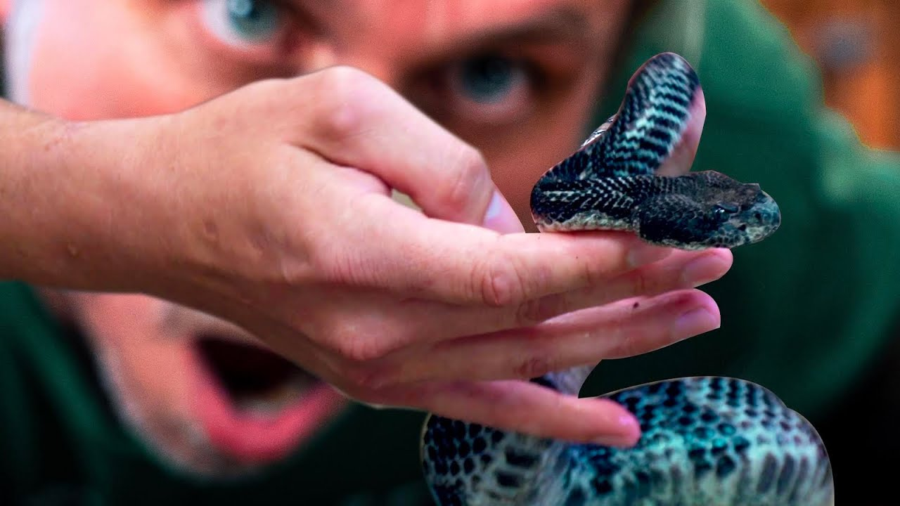 FREE HANDLING DEADLY VENOMOUS SNAKES!! **WILL NACE** | BRIAN BARCZYK