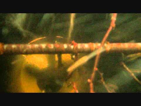 underwater turbine video
