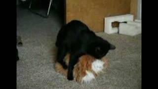 Kitty Porn