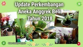 Update Perkembangan Aneka Anggrek Beli Tahun 2018